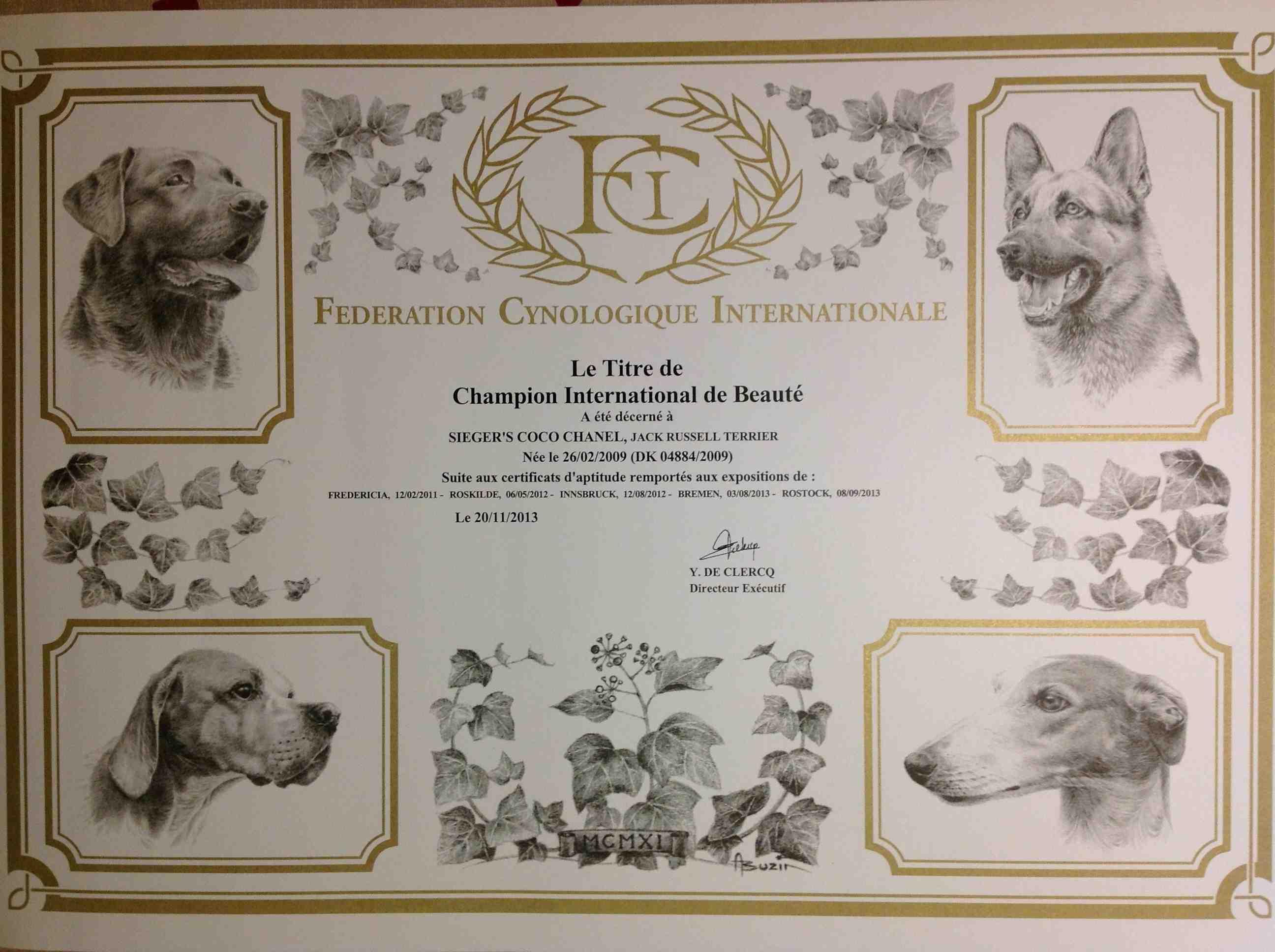 jack russell terrier - kennel jackstars debf6ce13ded
